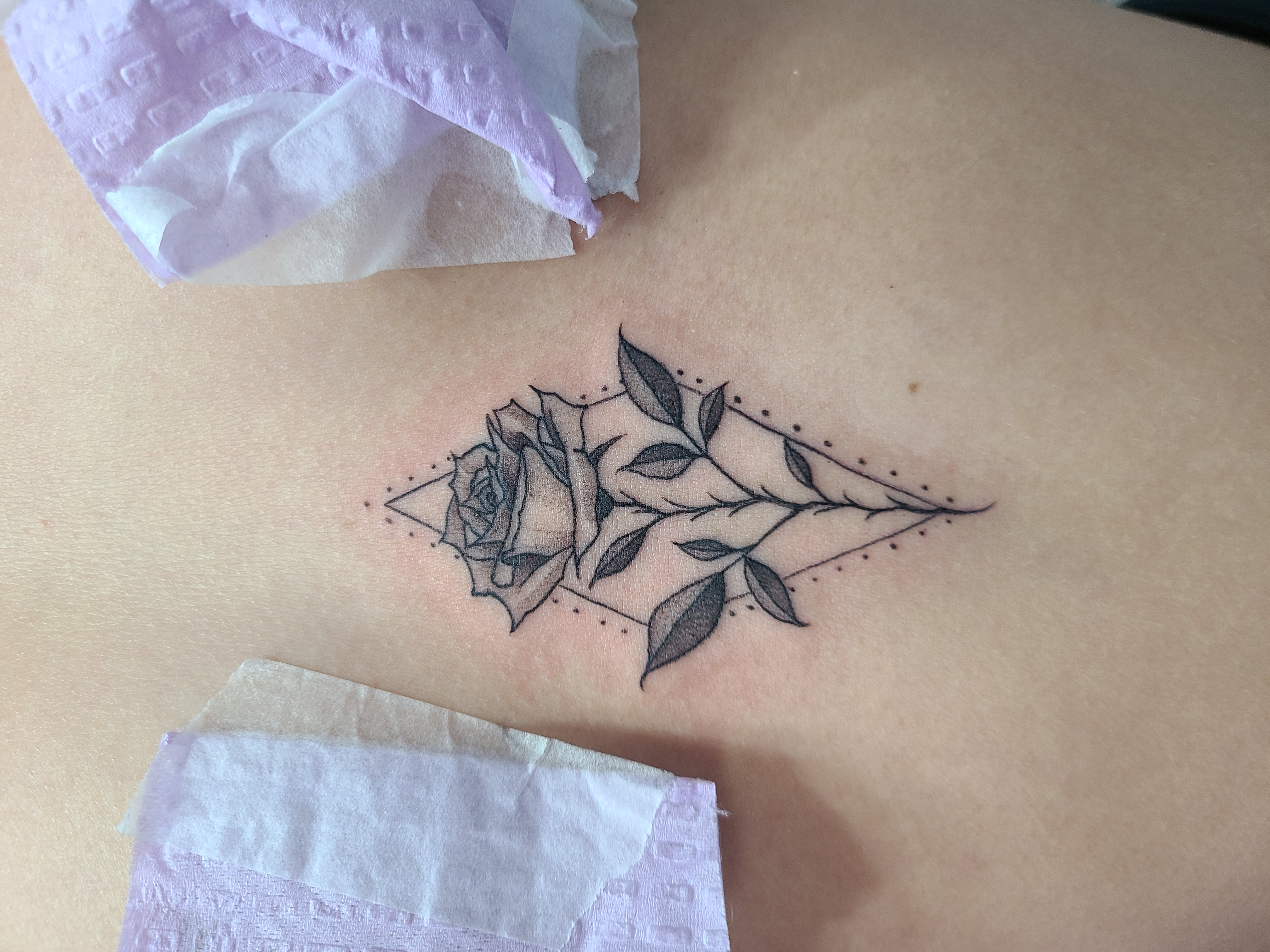 fineline rose