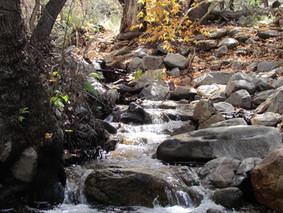 Madera Canyon.jpg
