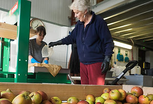 Cider production using cider press with Norfolk Suffolk apples