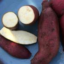 Sweet Potatoes, Murasaki