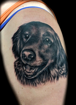 portrait - golden retiever - left arm