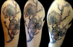 orchids - left upper arm