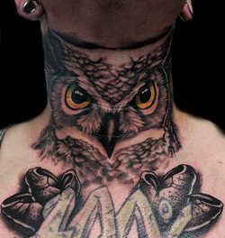 owl - throat