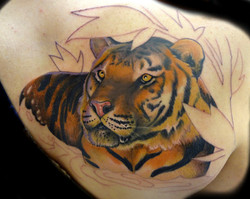 portrait - tiger - right shoulderblade