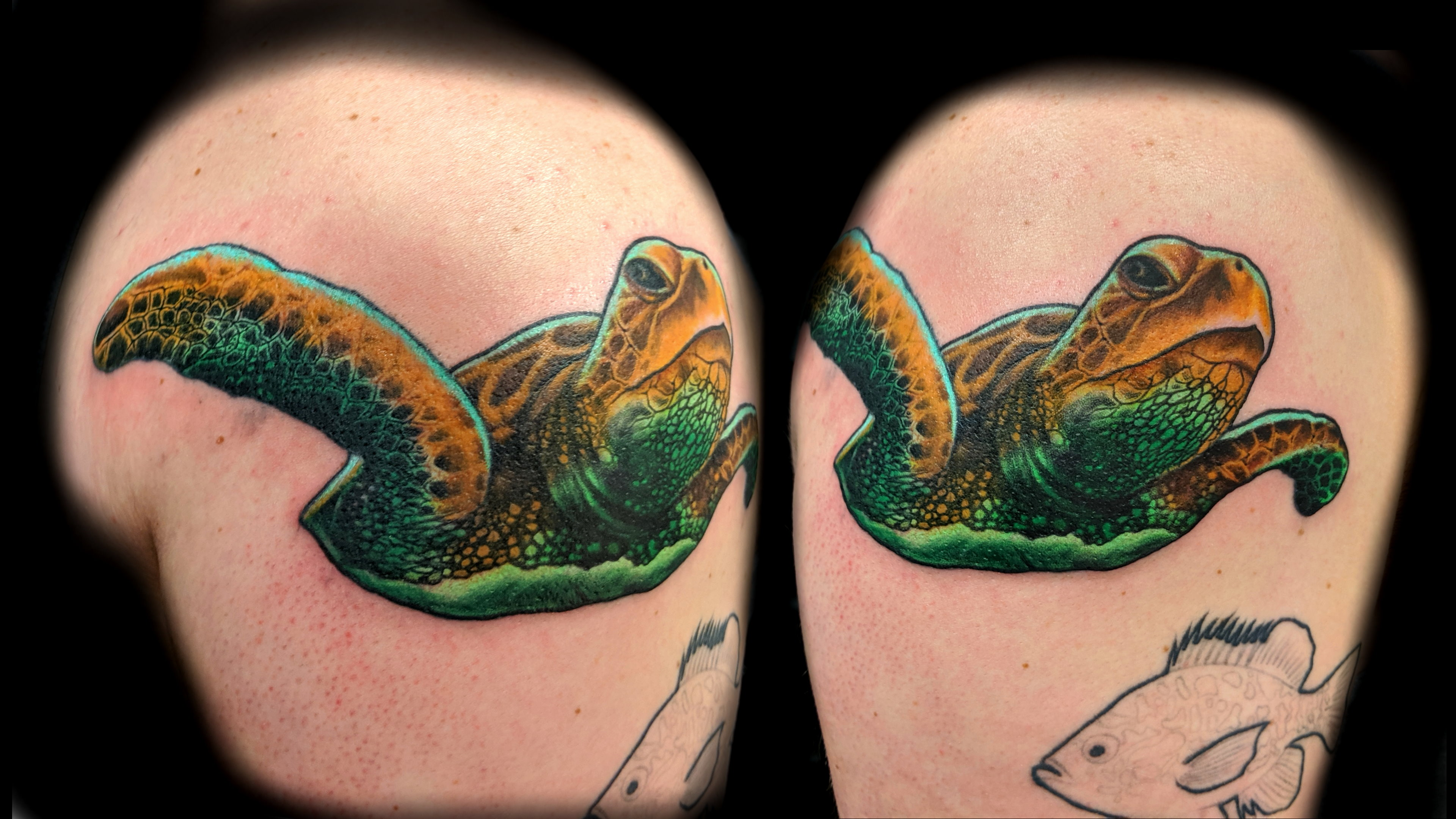 Sea turtle - upper right arm