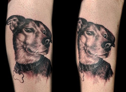 portrait - dog - right calf