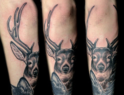 deer - left forearm