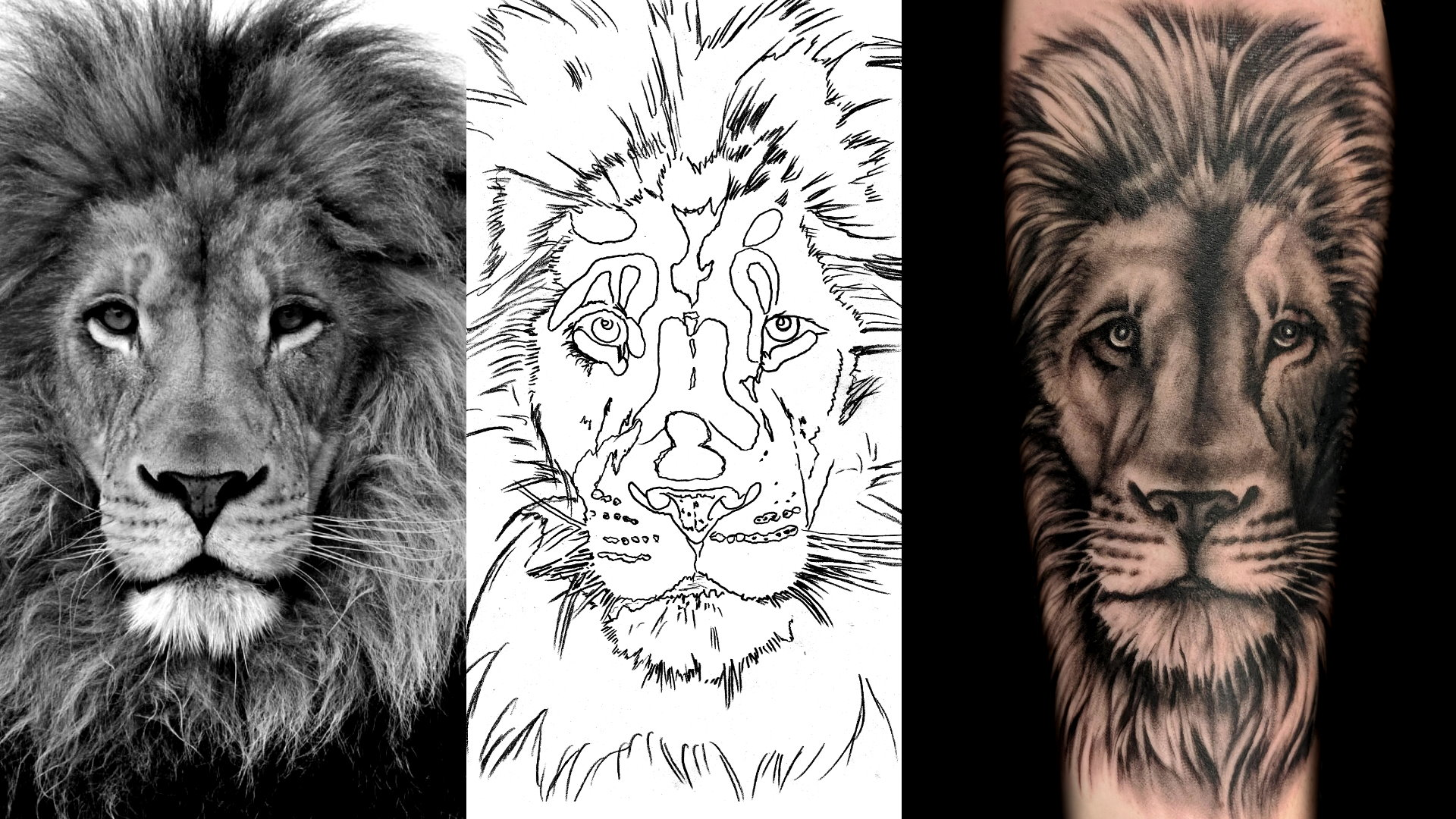 lion - left forearm - comparison
