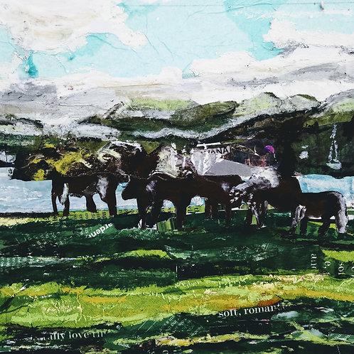 Windermere Cows