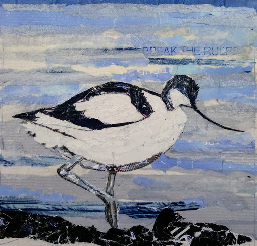 Avocet (sea and slider), 15cm sq, mixed