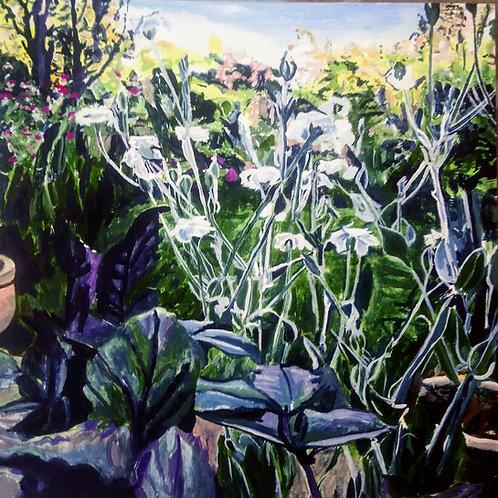 Clare's Garden