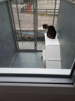 Moss Hall Farm cattery