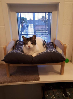 cattery 2
