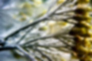 OLIVIELO-PHOT-LTR-7799-RET-FB.jpg