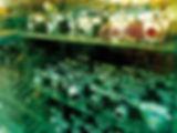 OLIVIELO-PHOT-LTR-1150767-NK-FB.jpg