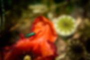 OLIVIELO-PHOT-APL-RET-LTR-2377.jpg