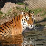 Boise Zoo.jpg