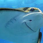 boise-family-attractions-aquarium.jpg