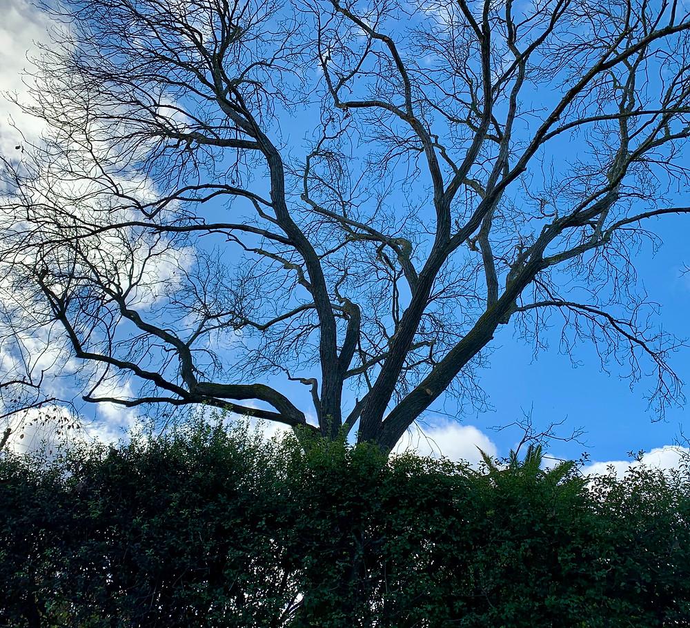 Dawn in December, Palo Alto, CA: Photo by Martha Clark Scala