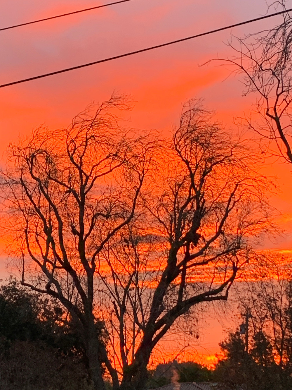 Dawn in December, Palo Alto, CA: Photo by Martha Clark Scala