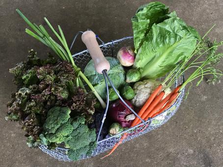 Grow Fall Veggies for Fresh Air, Exercise, Good Nutrition and Fun!