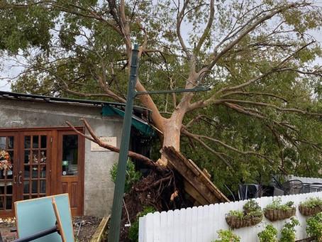 Evaluate Your Trees Before Hurricane Season