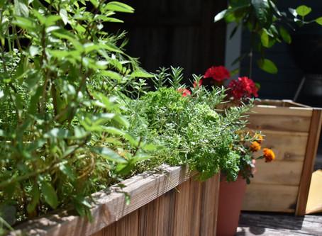 Creating An Enabled Garden
