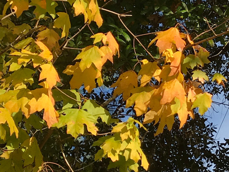 Plan Now for Fall Color in Coastal Alabama