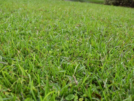 What Is Wrong With My Lawn?