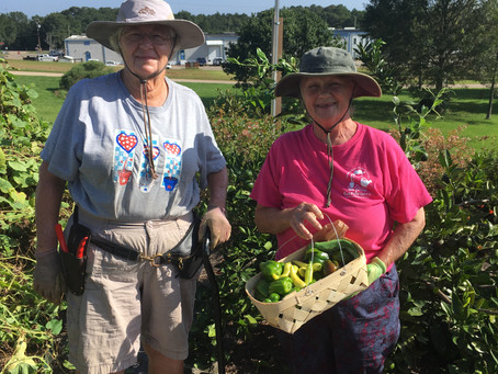 Master Gardeners Donate DREAM GARDEN Harvest Weekly