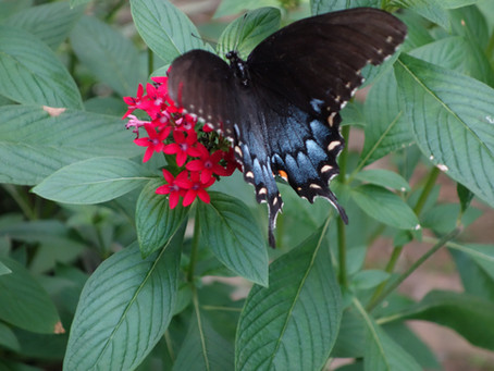 So, You Want a Butterfly Garden