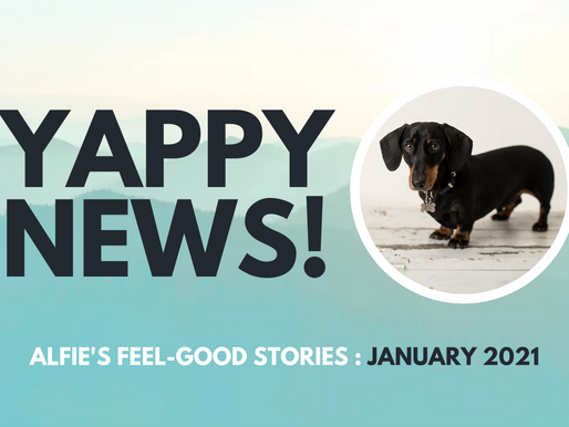 YAPPY NEWS: Feel-good stories from January 2021