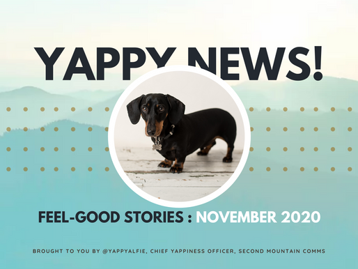Yappy News: Alfie's feel-good stories from November 2020