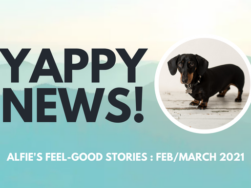 YAPPY NEWS: Feel-good stories from Feb & March 2021