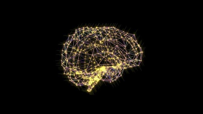 brain-large.jpg