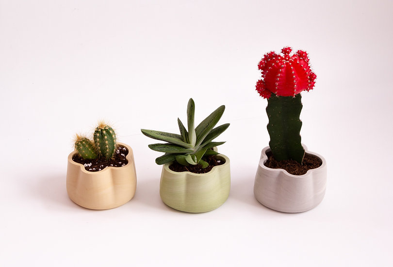 Jumony cacti & succulents planters - sets of 3 pieces
