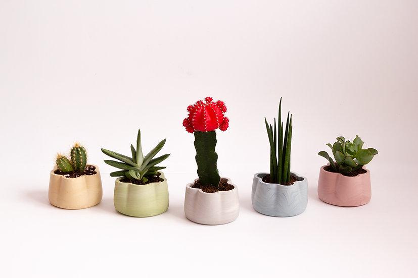 Jumony cacti & succulents planters