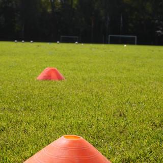 cones-field-grass-field-615860.jpg