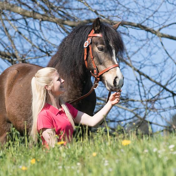 Erlebnisnachmittag mit Ponys und Pferden - etwas für die ganze Familie (1)