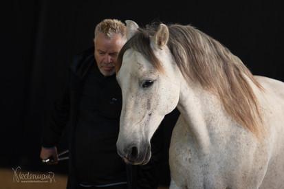 Guido Anderegg - Horseman