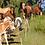 Thumbnail: Pony Patenschaft Duke - 1 Monat