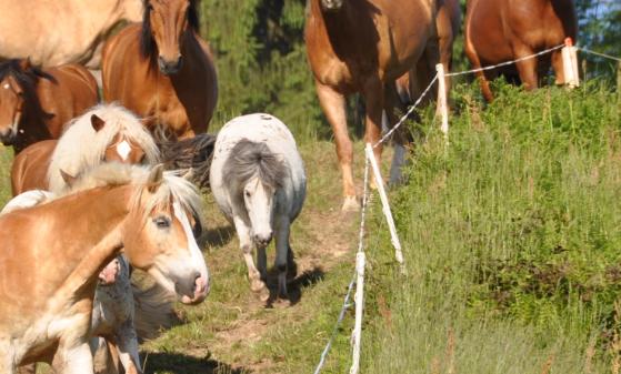 Pony Patenschaft Duke - 1 Monat
