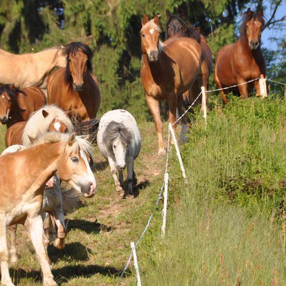 Erlebnisnachmittag mit Ponys und Pferden - Dezember