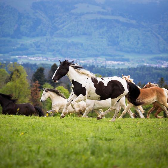 ausgebucht - Erlebnisnachmittag mit Ponys und Pferden - Mai