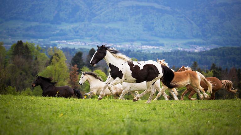Erlebnisnachmittag mit Ponys und Pferden - Mai