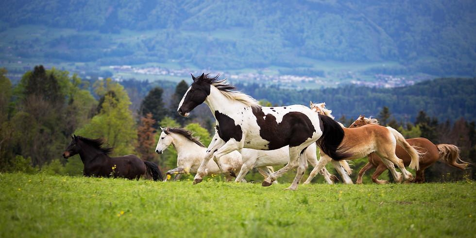 ausgebucht - Erlebnisnachmittag mit Ponys und Pferden - März