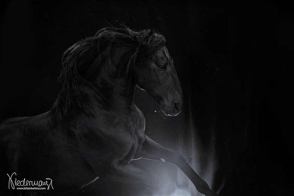 Janota im Silber Licht.jpg
