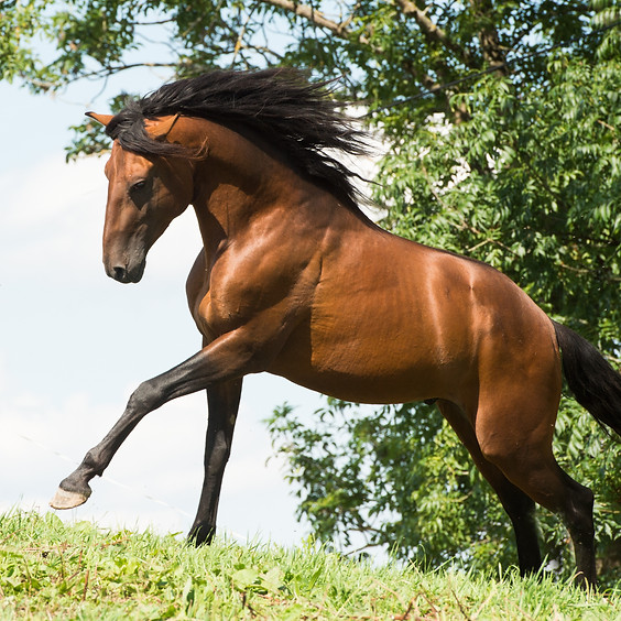 Horse Agility Kurs
