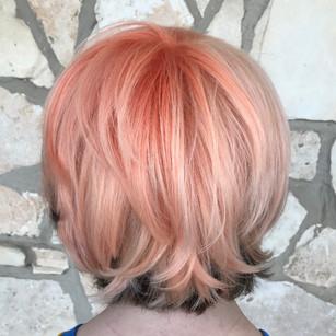 apricot - 1.jpg