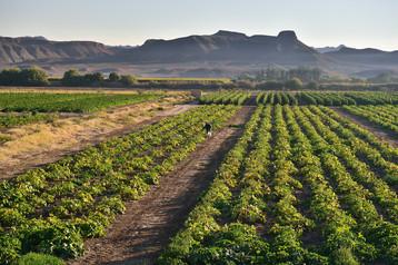 Coexistence: The South African Farmland Dilemma